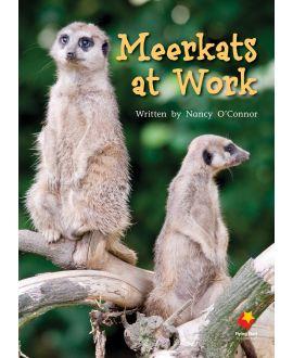 Meerkats at Work